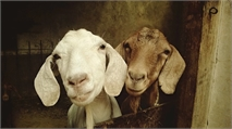 Separating the sheep from the goats:  What IS the best executive-level interview question?